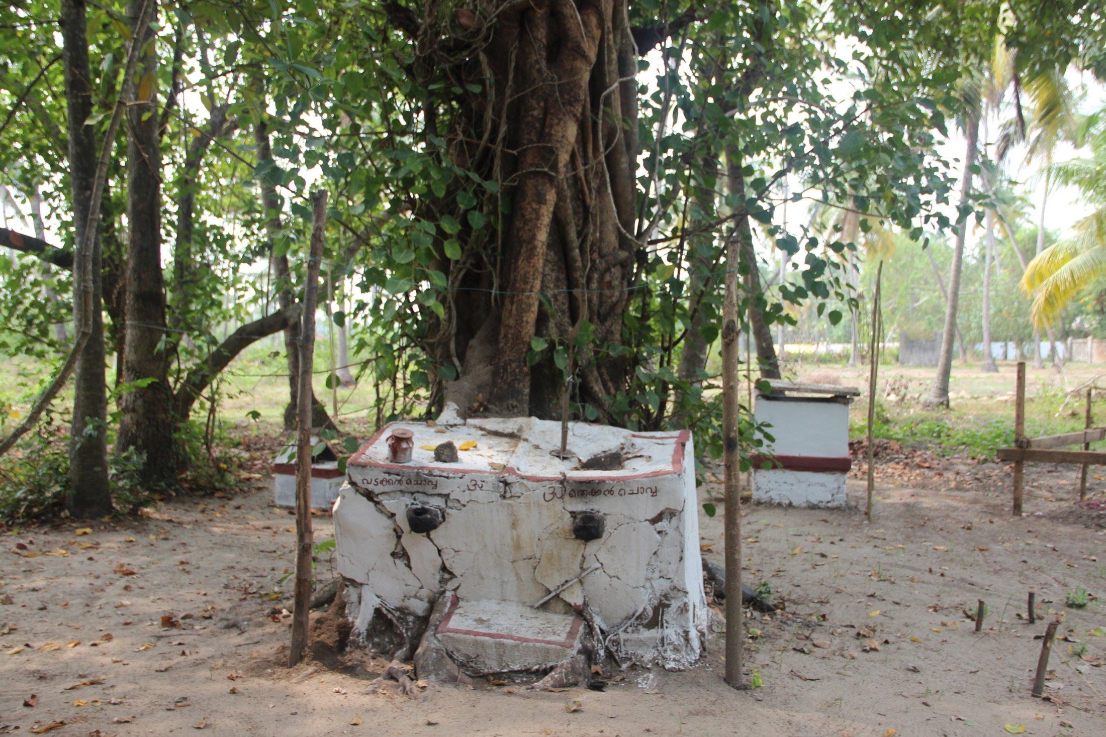 A Traditional Kaavu or Sacred Grove