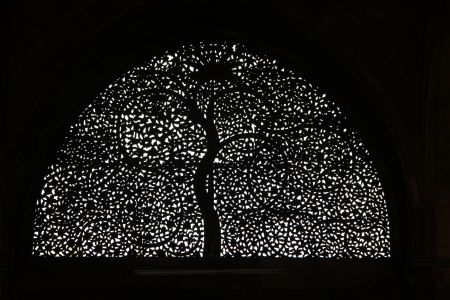 Tree of Life, Sidi Sayed Mosque