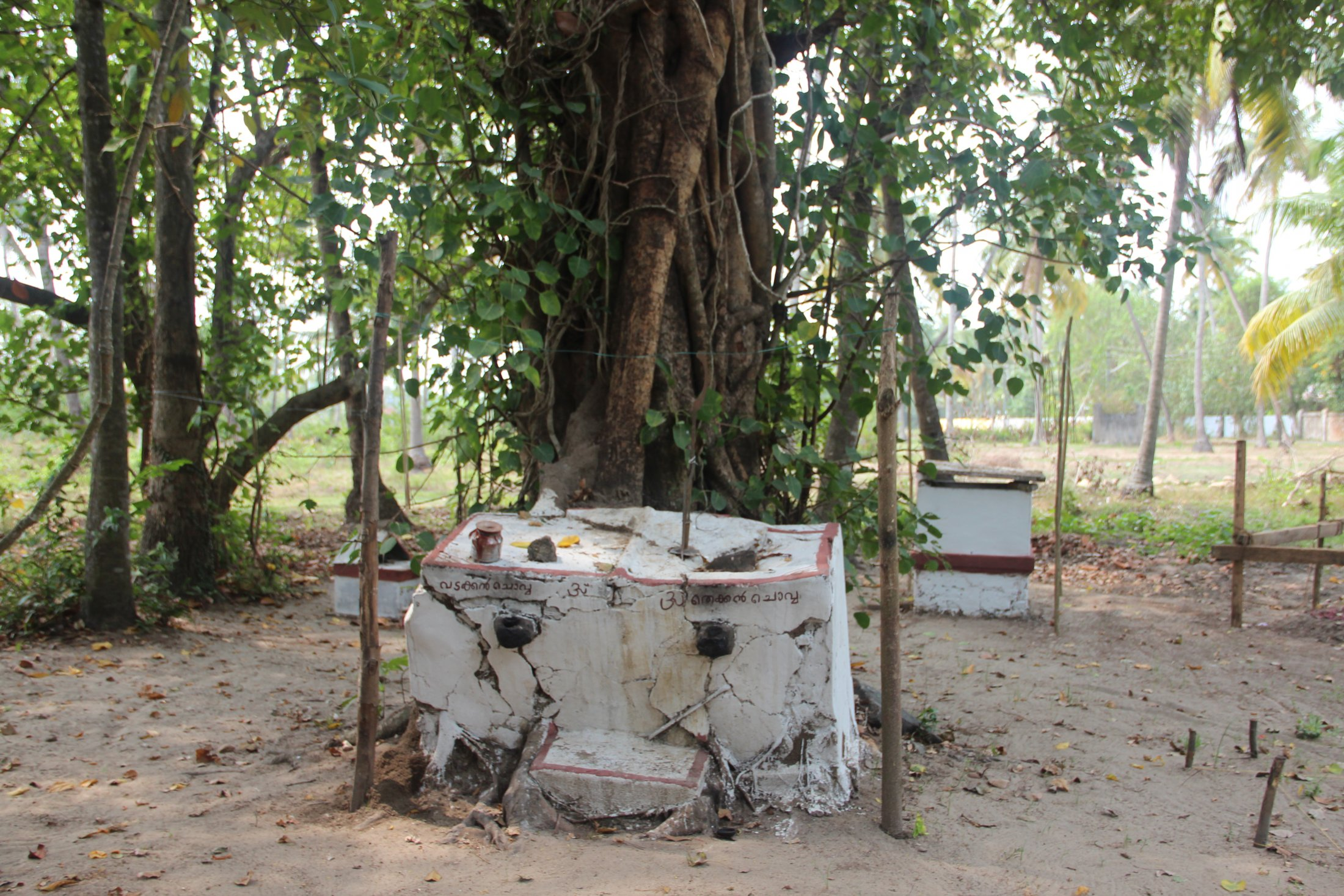 A Traditional Kaavu or Sacred Grove